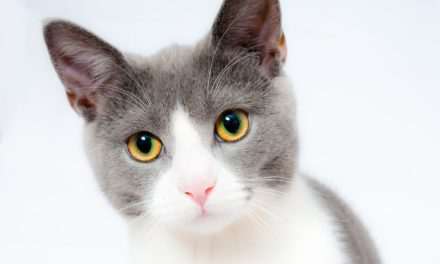 Are CBD based treats good for your cat's health?