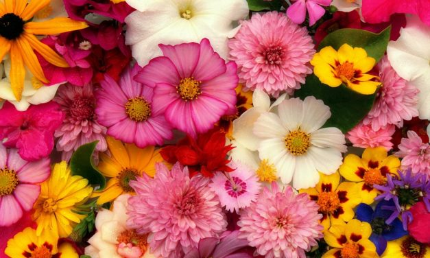 Six Most Popular Flowers for Bouquet Arrangement